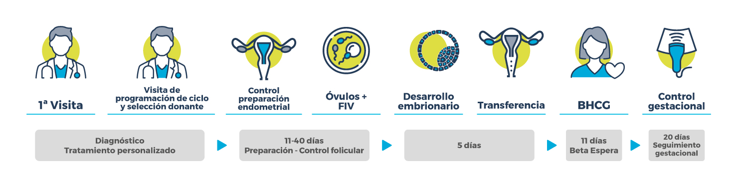 Procedimiento FIV con Donación de Óvulos